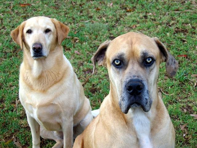 kritisch kijkende honden